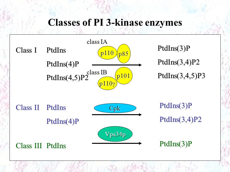 Classes of PI 3-kinase enzymes