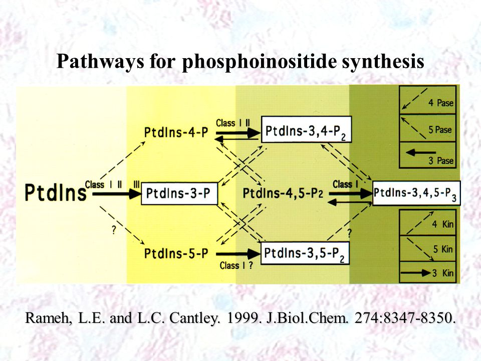 Pathways for phosphoinositide synthesis
