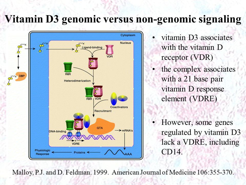 Vitamin D3 genomic versus non-genomic signaling