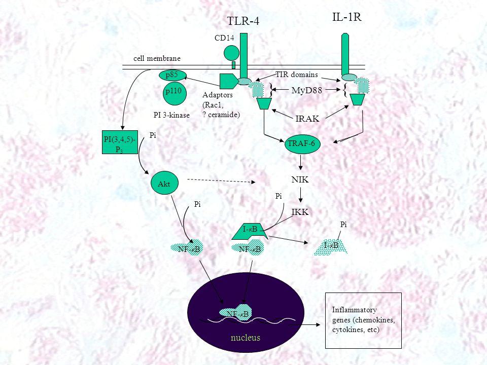 } { IL-1R TLR-4 MyD88 IRAK NIK IKK nucleus CD14 cell membrane p85