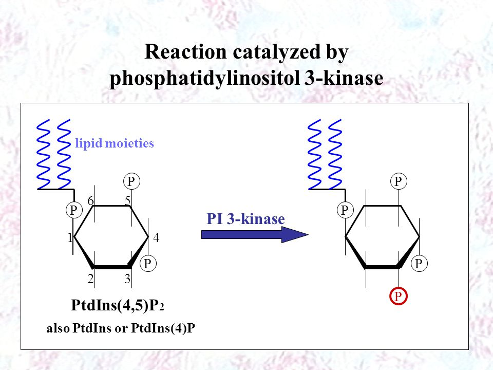 Reaction catalyzed by phosphatidylinositol 3-kinase