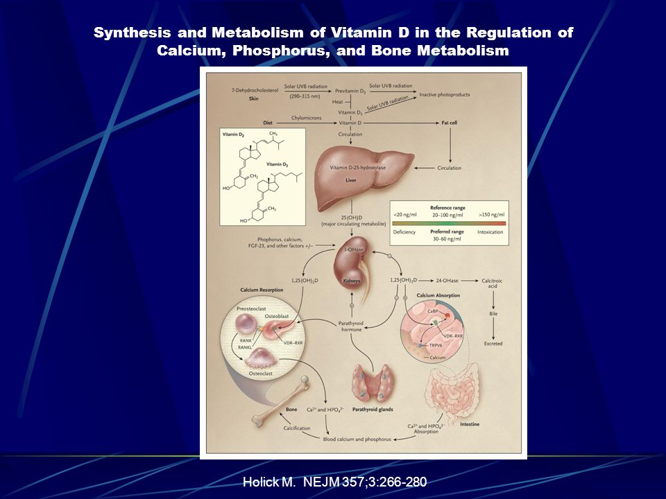 Synthesis and Metabolism of Vitamin D in the Regulation of Calcium, Phosphorus, and Bone Metabolism