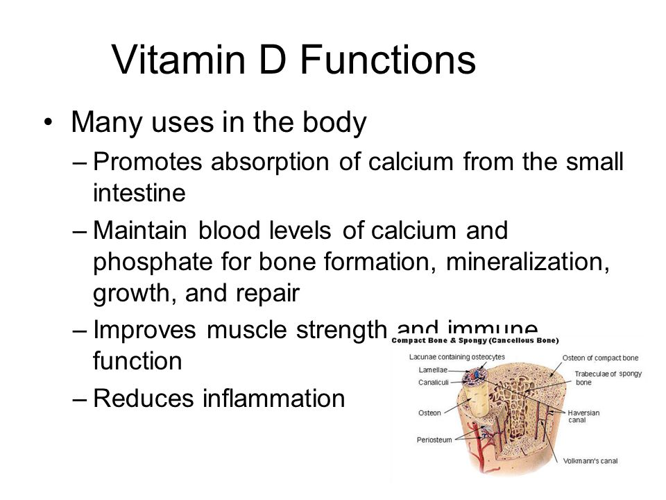 Vitamin D Functions Many uses in the body