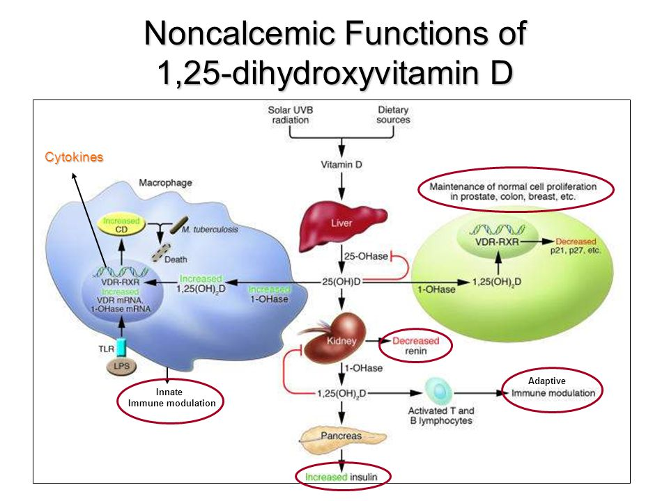 Noncalcemic Functions of 1,25-dihydroxyvitamin D