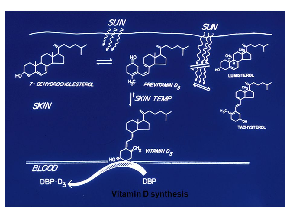 Vitamin D synthesis