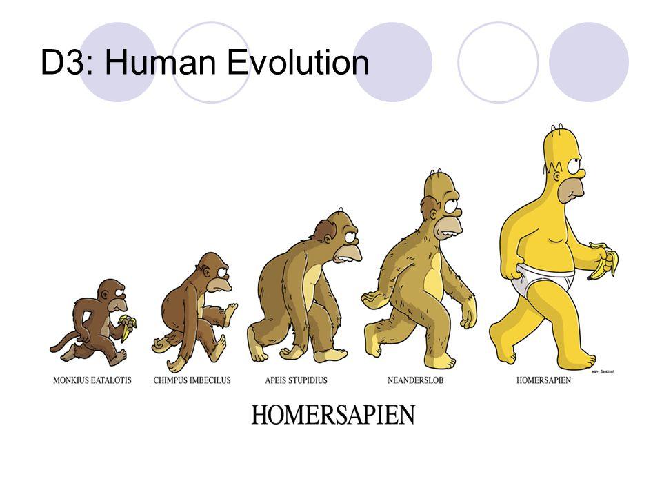 D3: Human Evolution