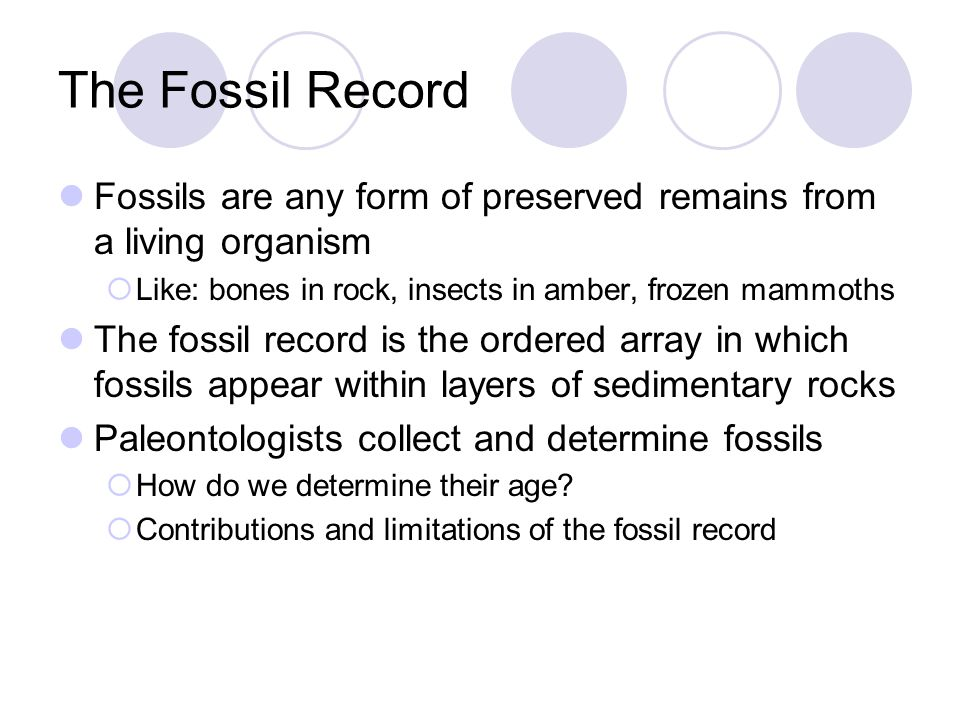 The Fossil Record Fossils are any form of preserved remains from a living organism. Like: bones in rock, insects in amber, frozen mammoths.