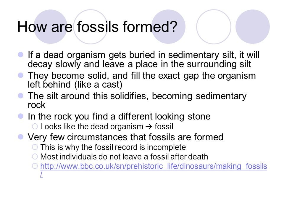How are fossils formed If a dead organism gets buried in sedimentary silt, it will decay slowly and leave a place in the surrounding silt.