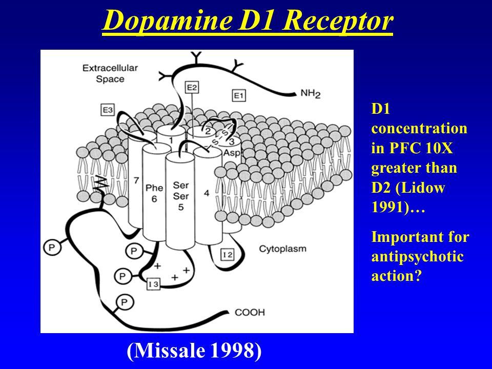 Dopamine D1 Receptor (Missale 1998)