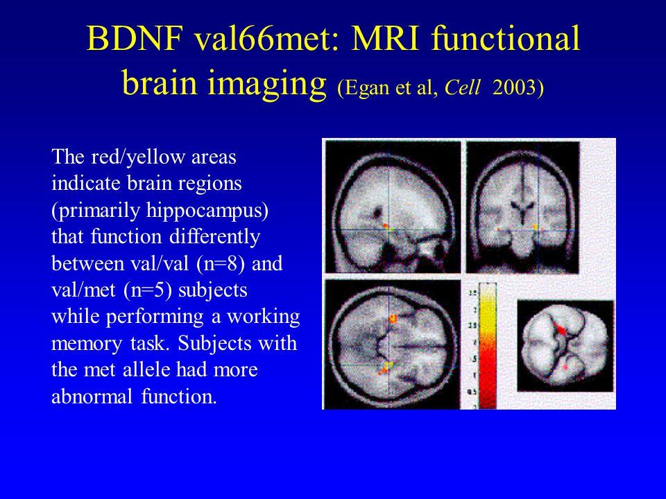 BDNF val66met: MRI functional brain imaging (Egan et al, Cell 2003)