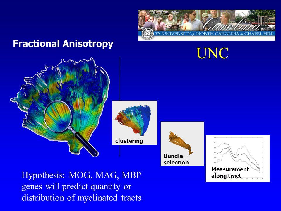 UNC Fractional Anisotropy