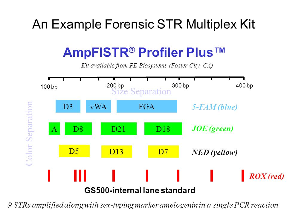 An Example Forensic STR Multiplex Kit