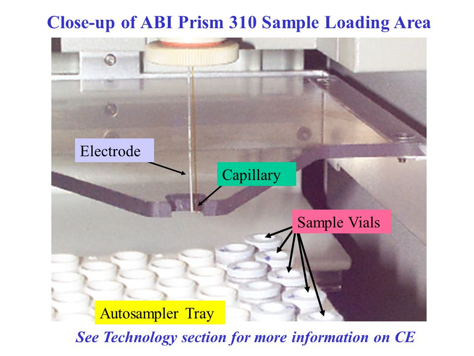 Close-up of ABI Prism 310 Sample Loading Area