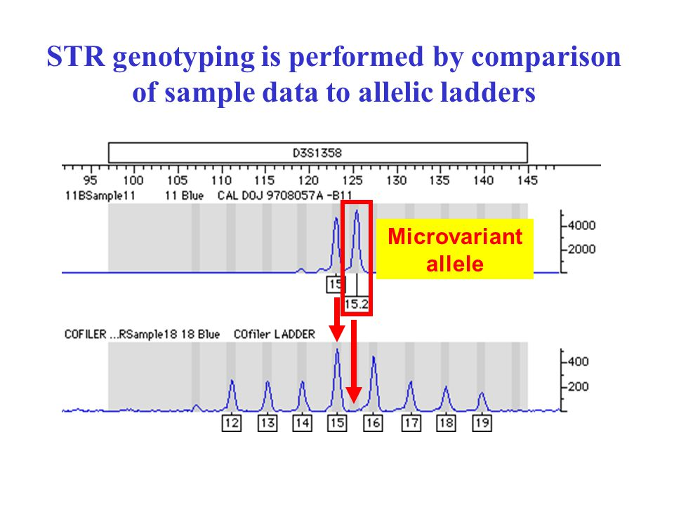 STR genotyping is performed by comparison of sample data to allelic ladders