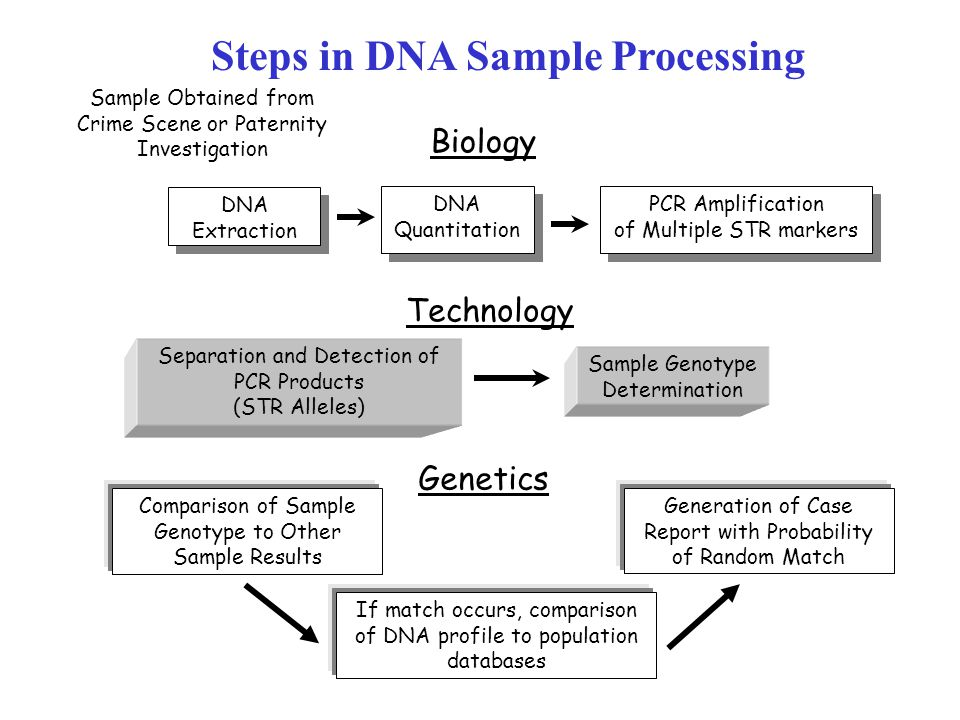 Steps in DNA Sample Processing