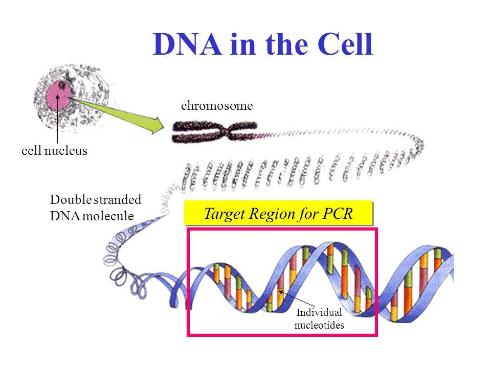 Individual nucleotides