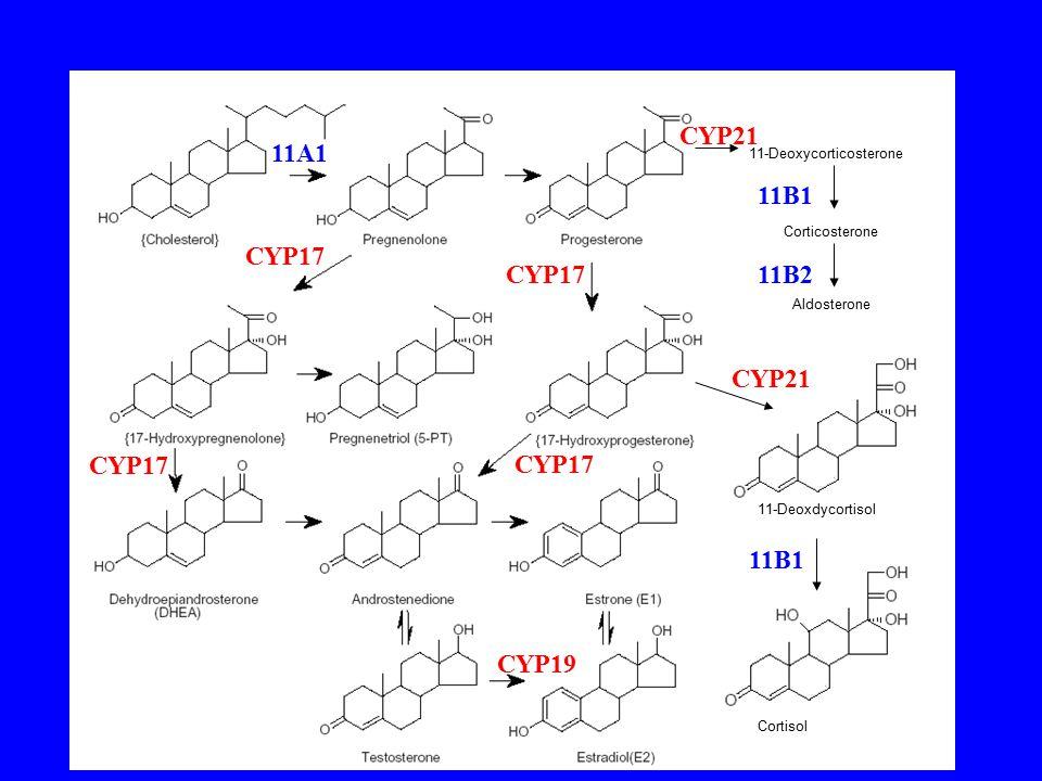 CYP21 11A1 11B1 CYP17 CYP17 11B2 CYP21 CYP17 CYP17 11B1 CYP19