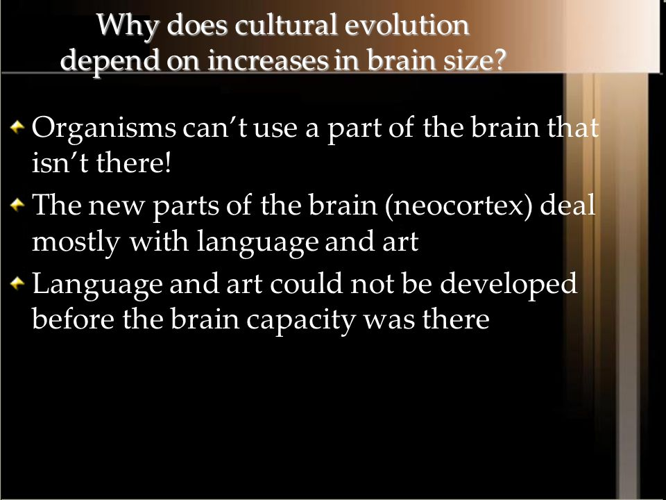 Why does cultural evolution depend on increases in brain size