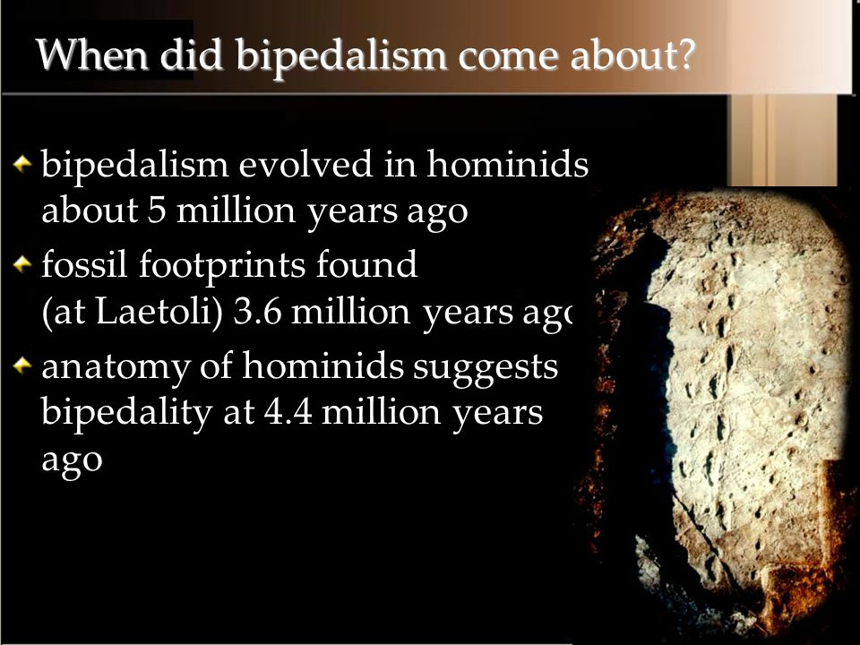 When did bipedalism come about