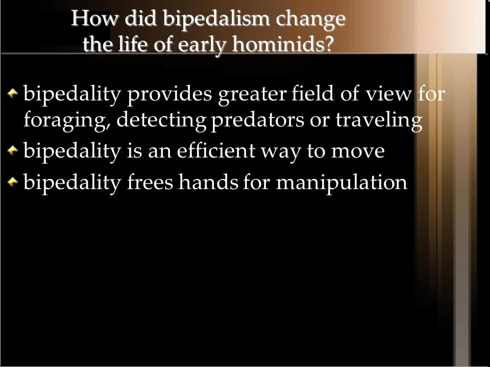 How did bipedalism change the life of early hominids
