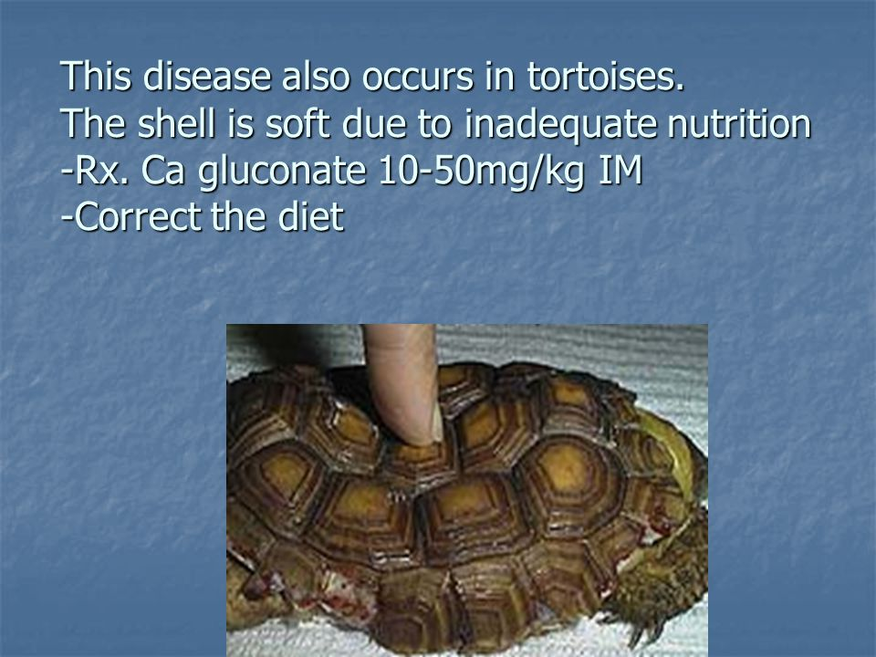 This disease also occurs in tortoises