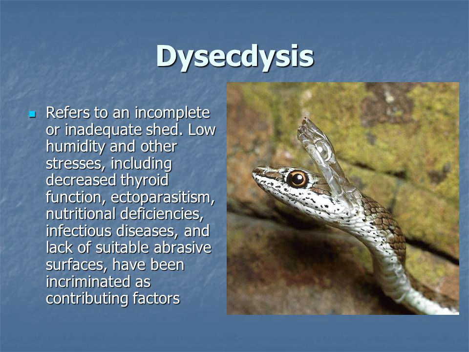 Dysecdysis