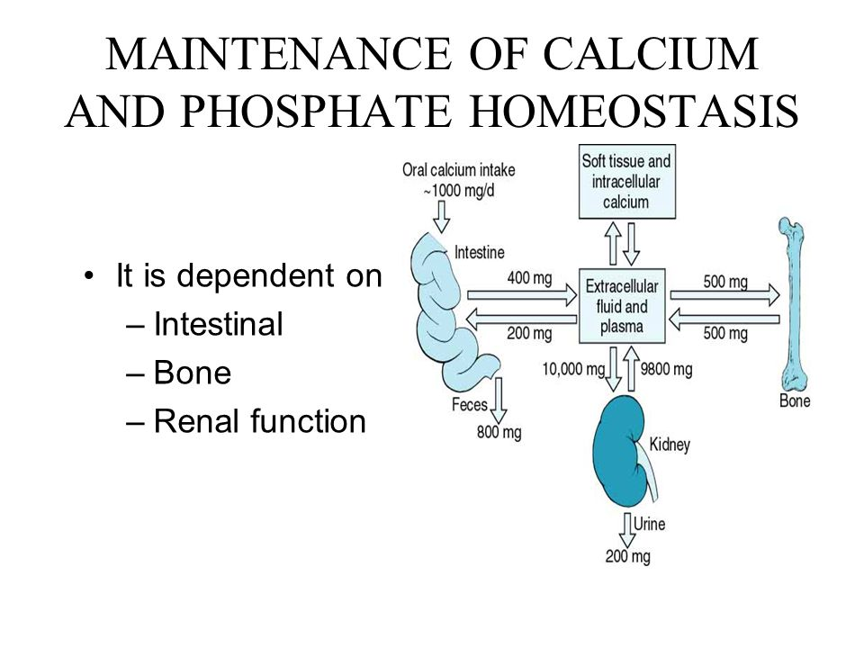 MAINTENANCE OF CALCIUM AND PHOSPHATE HOMEOSTASIS
