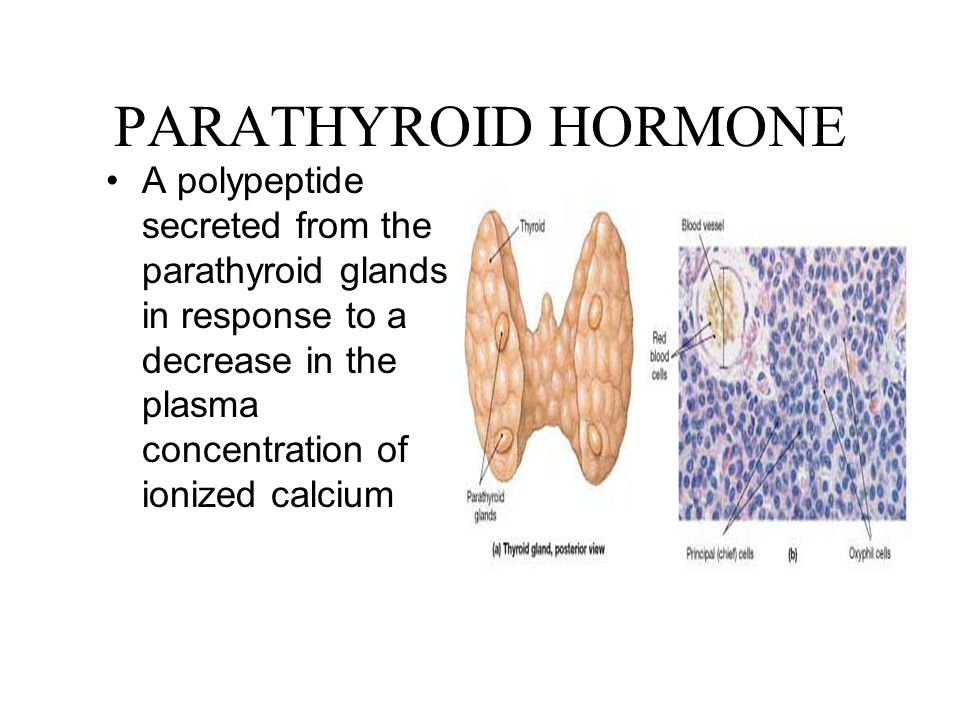 PARATHYROID HORMONE A polypeptide secreted from the parathyroid glands in response to a decrease in the plasma concentration of ionized calcium.