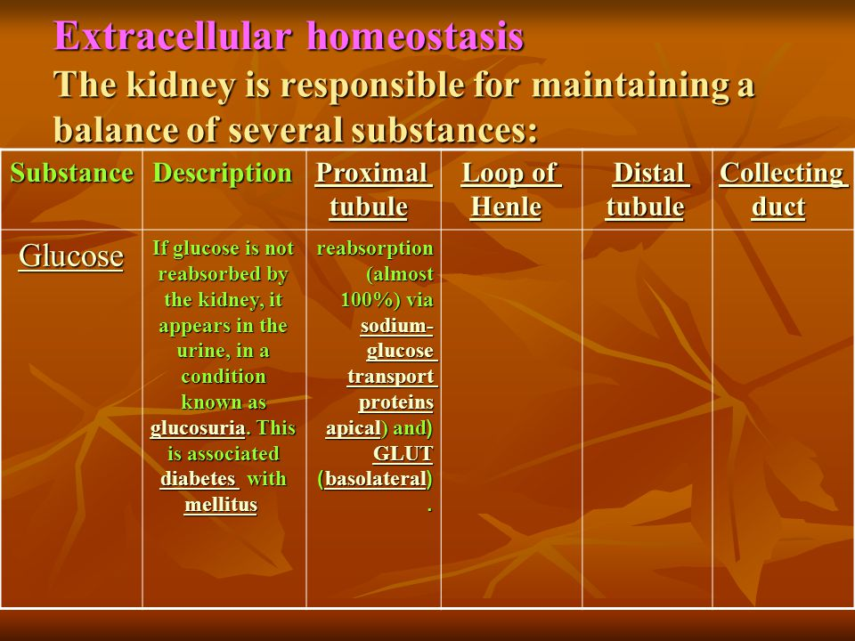 Extracellular homeostasis The kidney is responsible for maintaining a balance of several substances: