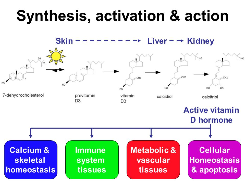 activation-sythesis theory