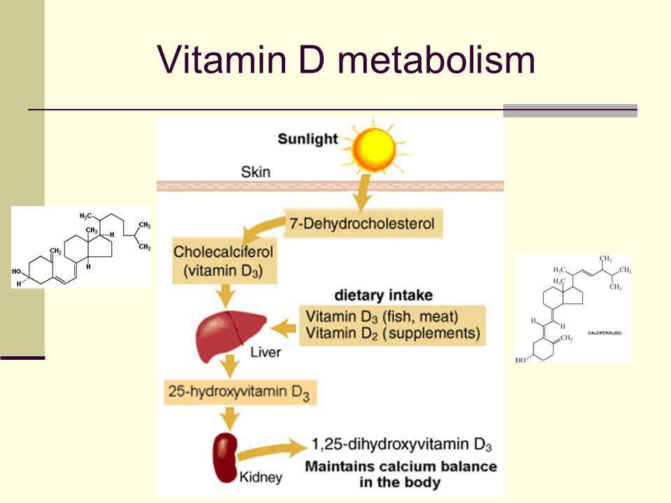 Vitamin D metabolism Ultraviolet B rays