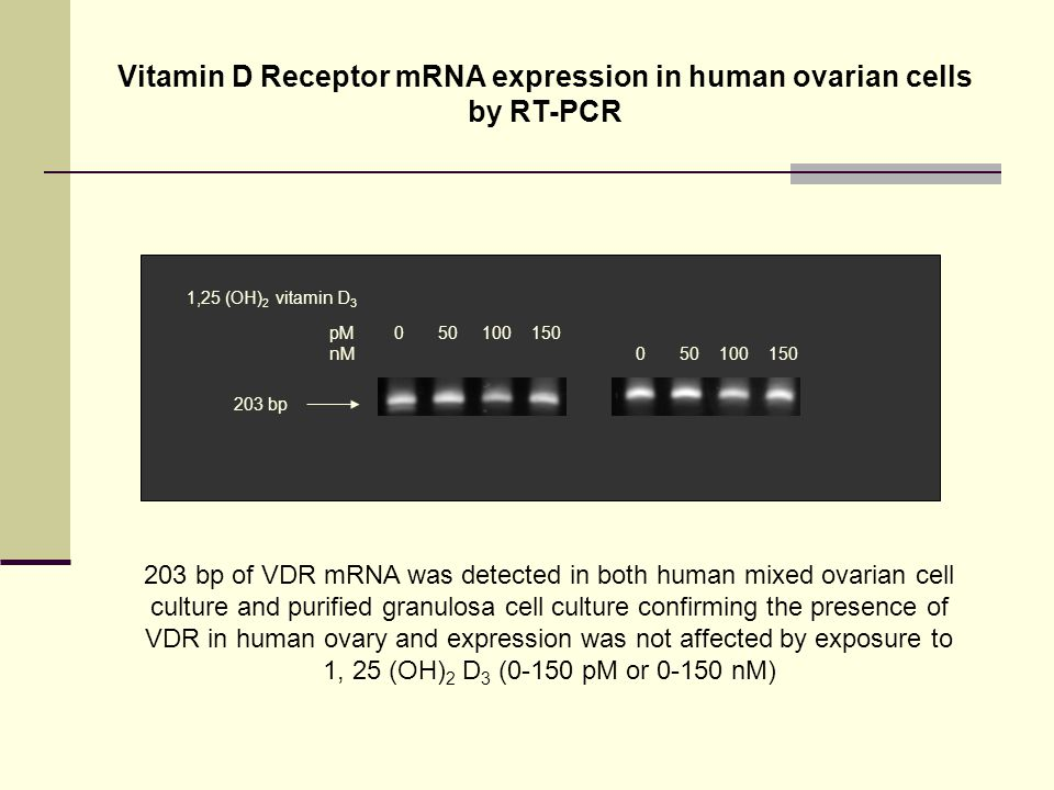 Vitamin D Receptor mRNA expression in human ovarian cells by RT-PCR