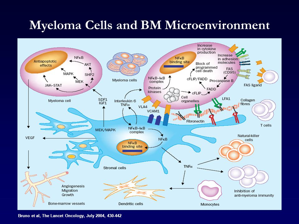 Myeloma Cells and BM Microenvironment