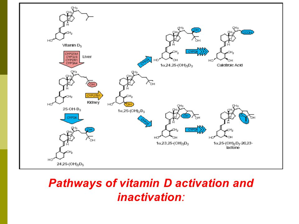 Pathways of vitamin D activation and inactivation: