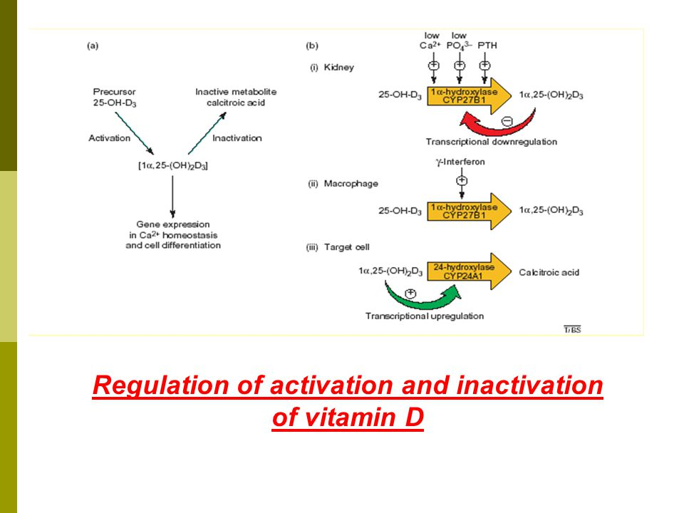 Regulation of activation and inactivation of vitamin D