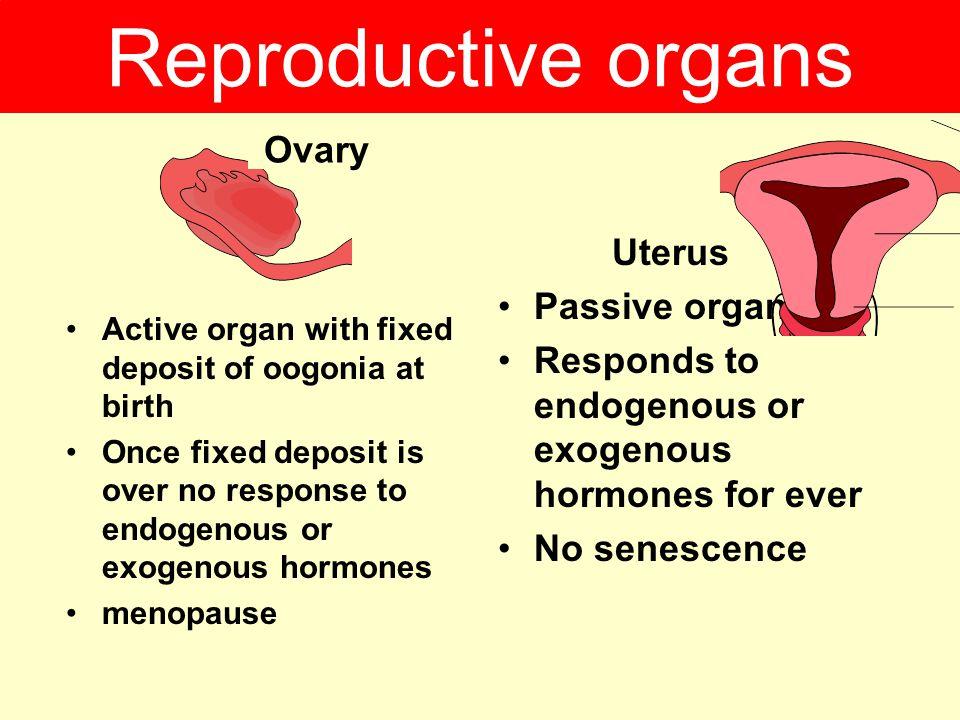 Reproductive organs Ovary Uterus Passive organ