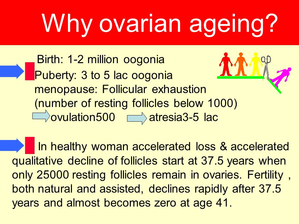 Why ovarian ageing Birth: 1-2 million oogonia