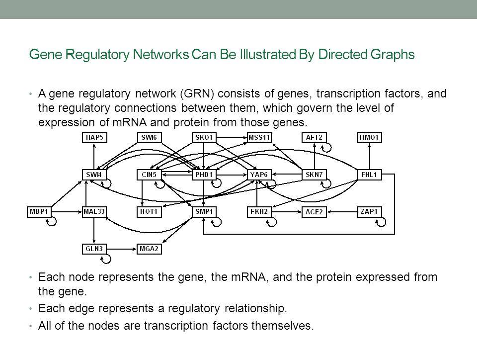 Gene Regulatory Networks Can Be Illustrated By Directed Graphs