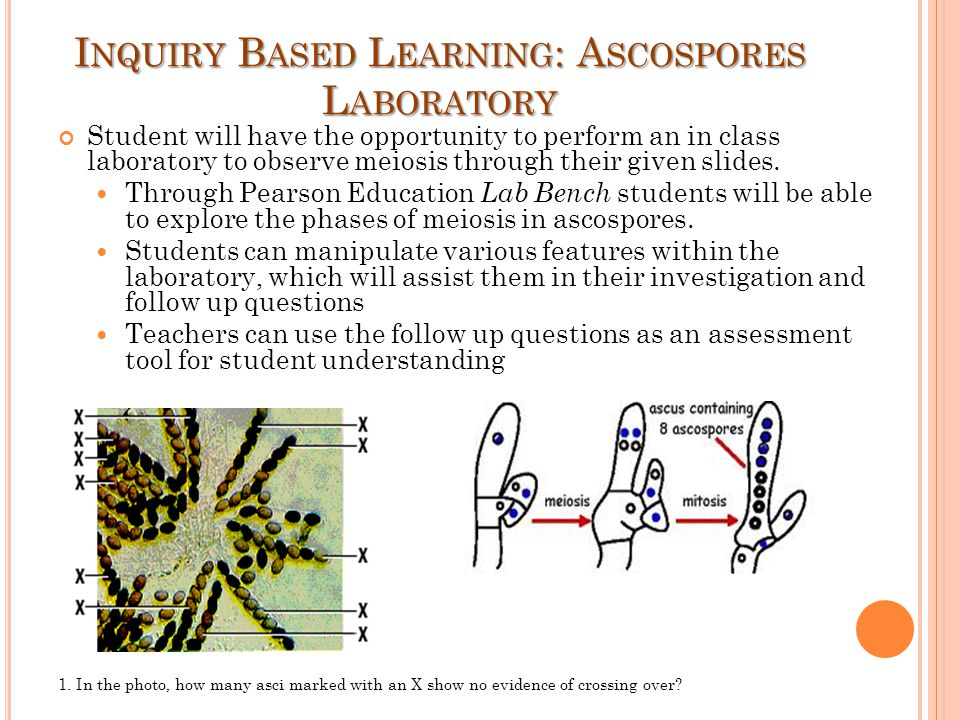 Inquiry Based Learning: Ascospores Laboratory