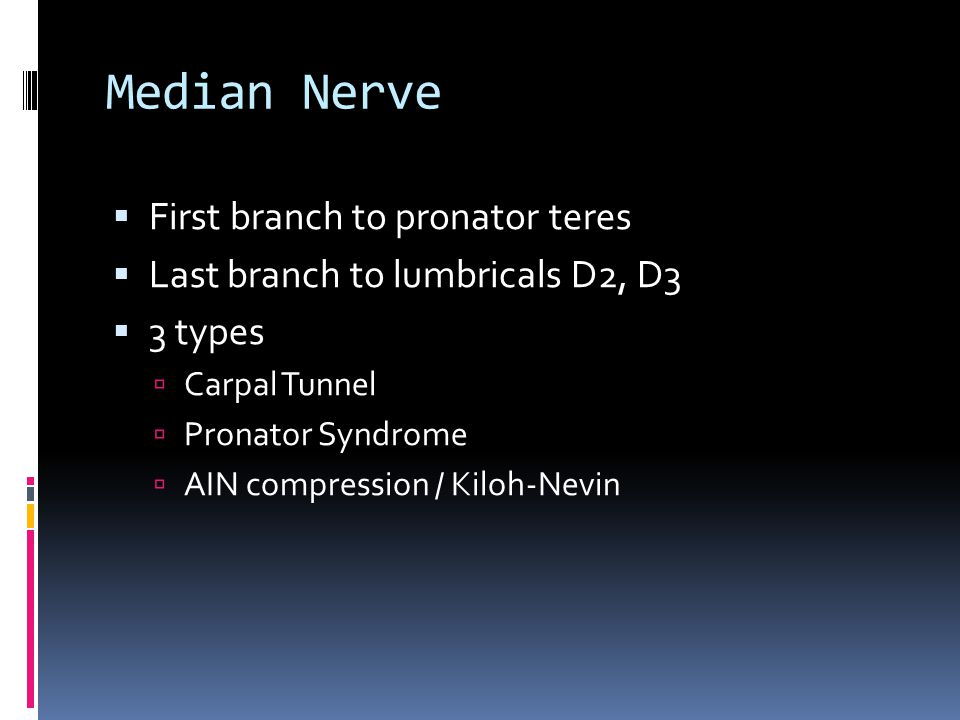 Median Nerve First branch to pronator teres