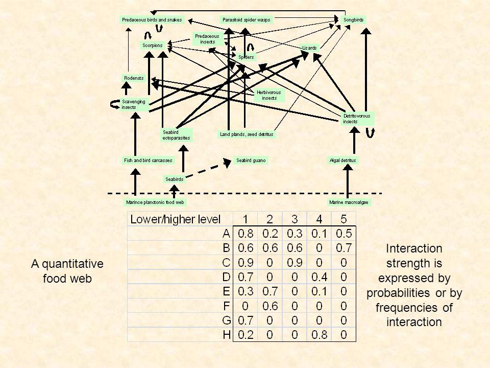 A quantitative food web
