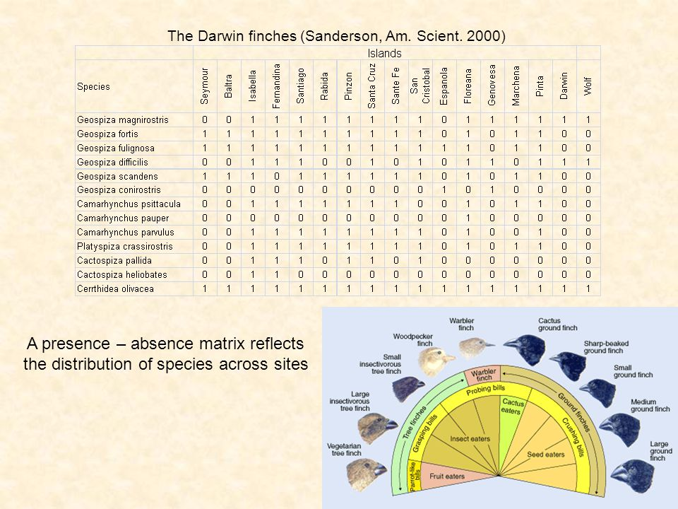The Darwin finches (Sanderson, Am. Scient. 2000)