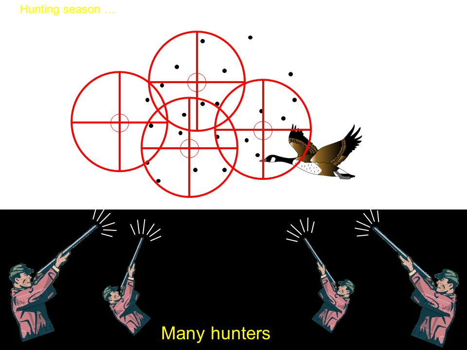 Hunting season … Many hunters