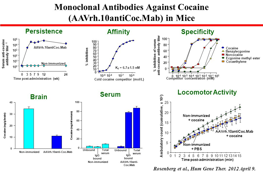 Monoclonal Antibodies Against Cocaine (AAVrh.10antiCoc.Mab) in Mice