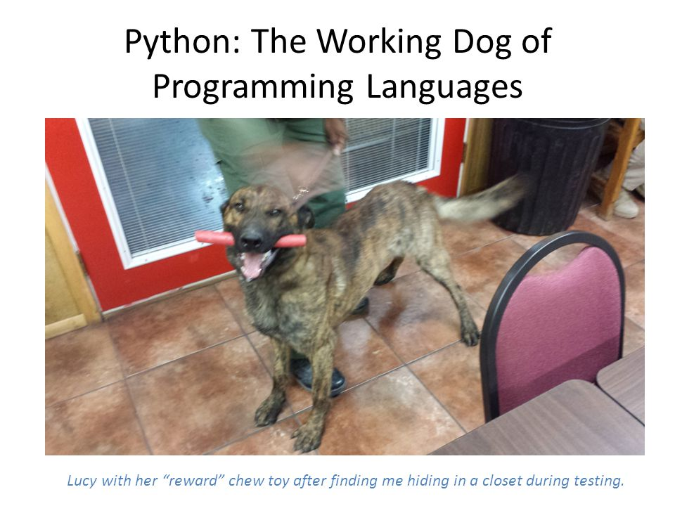 Python: The Working Dog of Programming Languages