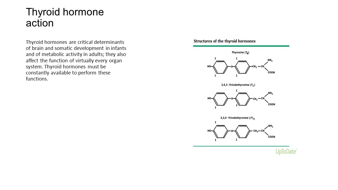 Hormone  Hormones of the thyroid gland  Britannicacom
