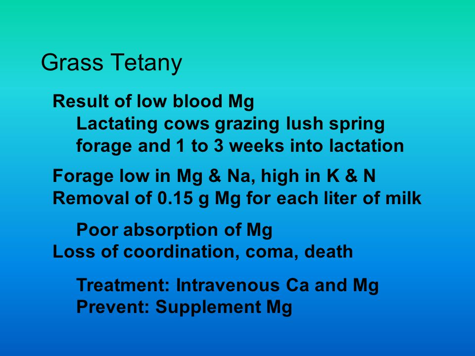 Grass Tetany Result of low blood Mg Lactating cows grazing lush spring