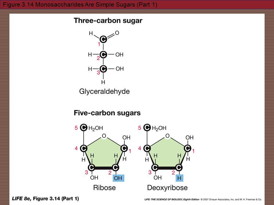 Figure 3.14 Monosaccharides Are Simple Sugars (Part 1)
