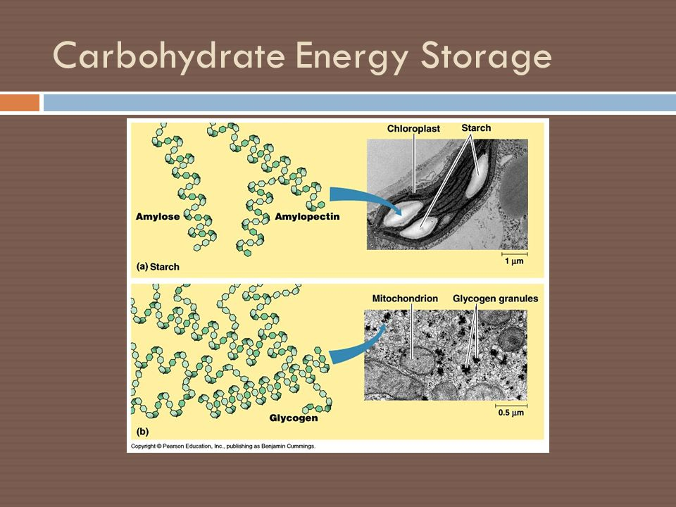 Carbohydrate Energy Storage