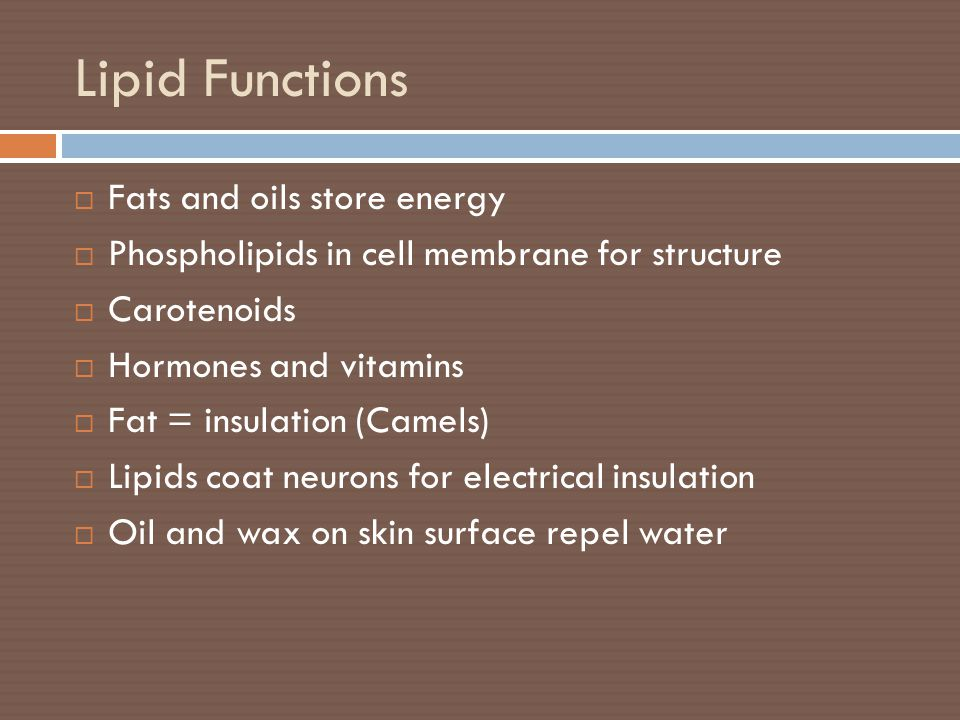 Lipid Functions Fats and oils store energy